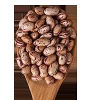 pinto _beans_lozano